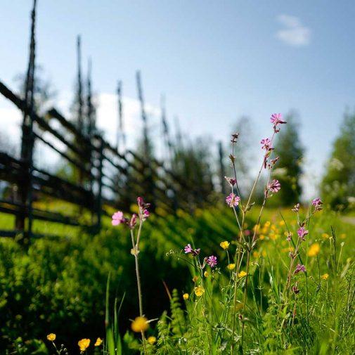 Bastberg Leksand blomsterang