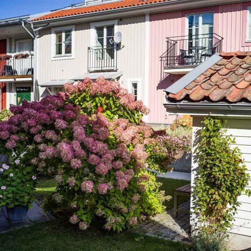 Kassoren Mariefred vy garden