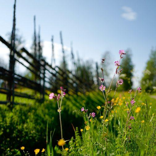 Bastberg blomsterang